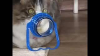 Кот в бутылке!