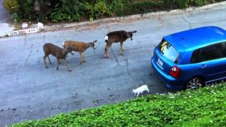 Кот и семейство любопытных оленей