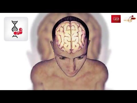 hqdefault - La mémoire du temps passé : L'homme au cerveau éclaté