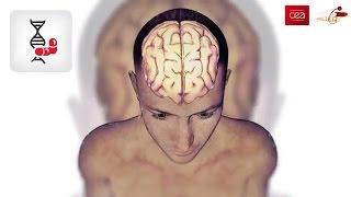 [Comment ça marche] Le cerveau et les neurones