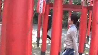 Shinto Shrine Torii Gates Passage