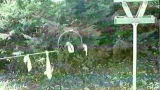 My Bird Feeding Station Outside My Bedroom Window
