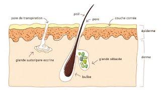 Remède pour peau sèche