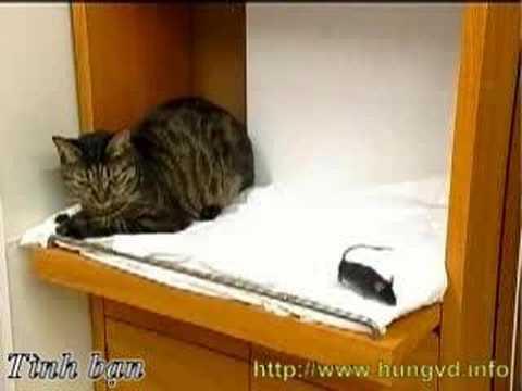 Tình bạn Mèo và Chuột