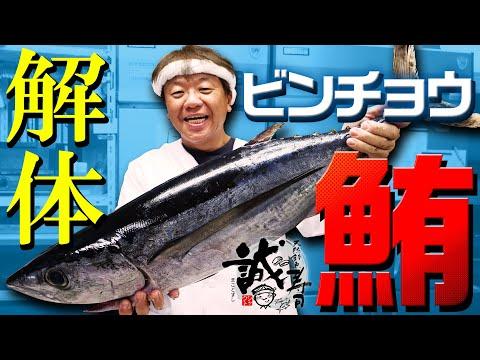 特別企画 誠寿司 ビンチョウマグロをさばく。その1解体編 トンジギ