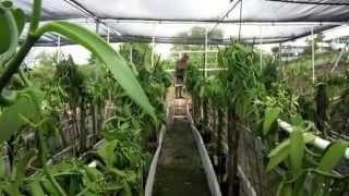Vanilla Bean Farm Tour in Kailua-Kona, Hawaii- For Sale
