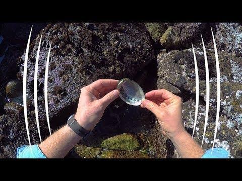 Monterey Bay Tidal Pools, California - The Sound Traveler