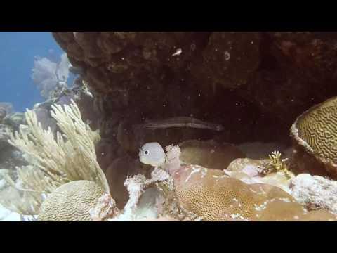 Belize 2017 Belize Marine TREC