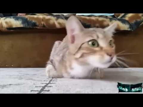 Кот смотрит фильм ужасов!
