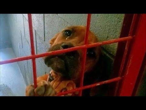 Фото плачущей собаки разлетелось по Сети и всего через один день ее жизнь кардинально изменилась