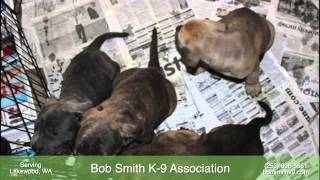 Bob Smith K-9 Association - Canine Training In Lakewood, Wa