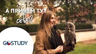 Обучение в Чехии. Отзыв о GoStudy от студентки. Курсы чешского языка.