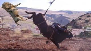 笑える - 面白 - 最も驚くべき野生動物の攻撃❖ライオンvsバッファロー ...