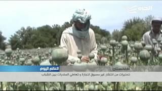 انتشار غير مسبوق للمخدرات تجارة وتعاطياً في افغانستان