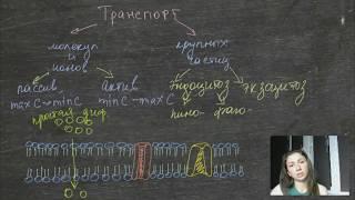 Транспорт веществ через мембрану