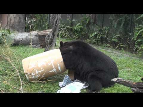 Bear Awareness Days at the Palm Beach Zoo - May 2012