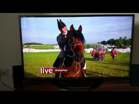 Talking horse live on TV