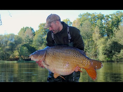 Monster Carp Of 83lb (37.6kg) - Carp Fishing Blog Autumn 2014