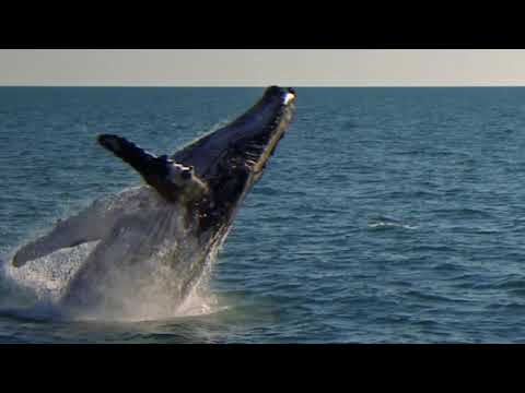 Oil and Gas 101: Offshore Seismic Surveys at Woodside