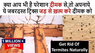 एक ही बार में जड़ से ख़त्म करे दीमक को इस सटीक उपाय से  How To Get Rid Of Termites Naturally Furniture