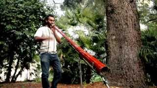 Frogs Ballad video | Albero Sonoro didgeridoo solo Christian Muela