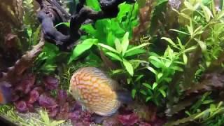 Красивые аквариумы