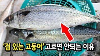국민 생선 고등어의 불편한 진실(정말 맛있는 고등어란 이런 것)