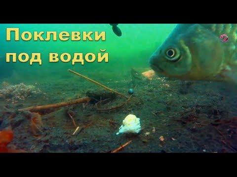 Как клюет карась под водой видео