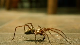 Spiders are GOOD, here's why you shouldn't be afraid to let them in