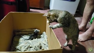 Mother cat hides her baby kittens