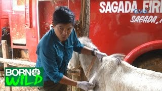 Born to Be Wild: Doc Nielsen's medical mission in Sagada
