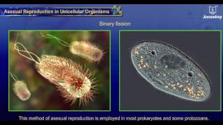 Asexual Reproduction in Unicellular Animals | Reproduction | Science