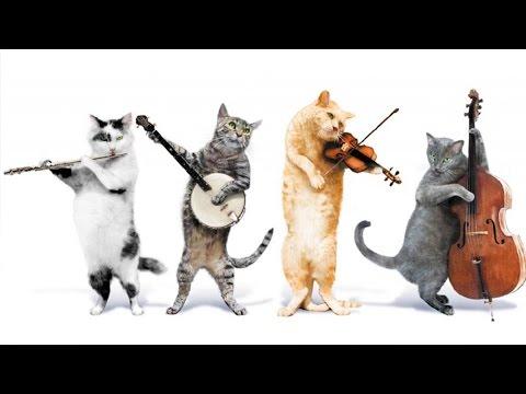 Смешные Кошки которые Поют. приколы с котами