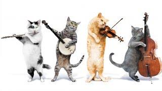 Cat Dancing and Singing (Кошки Танцуют и Поют) 2015