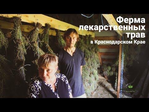 Ферма лекарственных трав в Краснодарском Крае