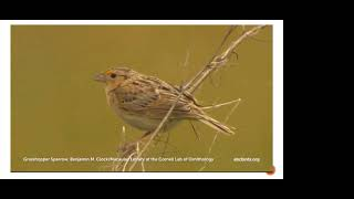 OPJV Grassland Bird ID pt2 Sparrows only