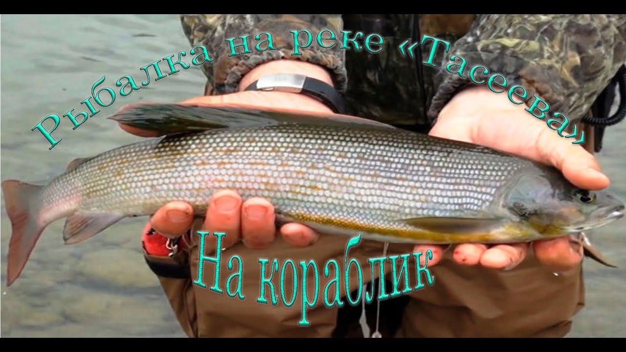 Хариус ловля на реке кия