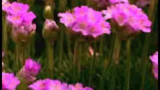 Говорящие цветы.wmv(Подарок для женщин., 2011-03-16T22:39:20.000Z)