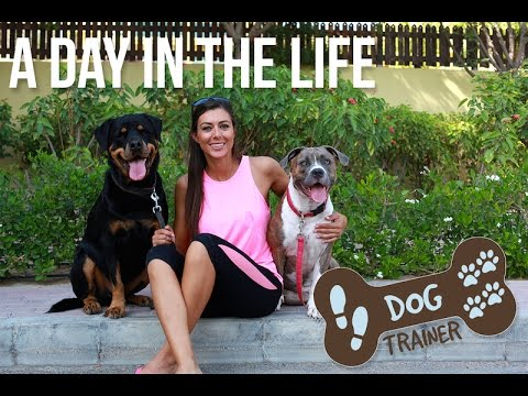 A Day In The Life Of: A Dog Trainer In Dubai