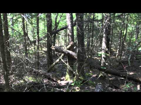 Longest Bigfoot trackway ever found.  Northern Minnesota Border March 2012