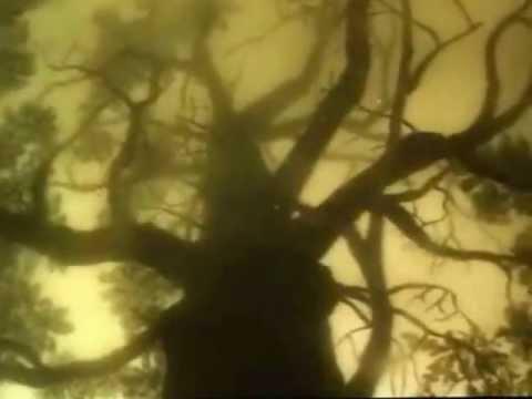 Ёжик в тумане(Прикол)