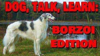 Drink Talk Learn: Borzoi Dog Breed