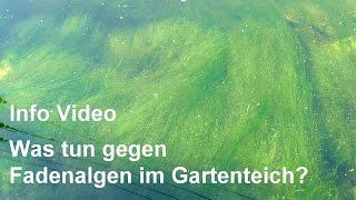 Fadenalgen im Gartenteich - Was tun, um Fadenalgen zu bekämpfen? - Video-Info lesen!