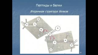 Аминокислоты и белки  Строение и свойства