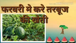 तरबूज की खेती करे (tarbuj ki kheti)और लाखो रूपये का मुनाफा कमाये#smartkheti