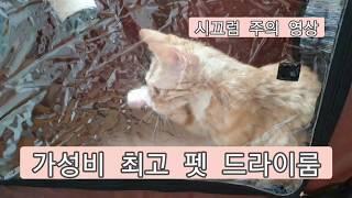 가성비 최고 펫 드라이룸 사용후기..(다다무역 제품) …