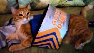 Кот сбрасывает лишний вес.MOV
