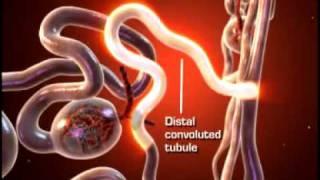 ginjal dan pembentukkan urine visual content administered by amritatv