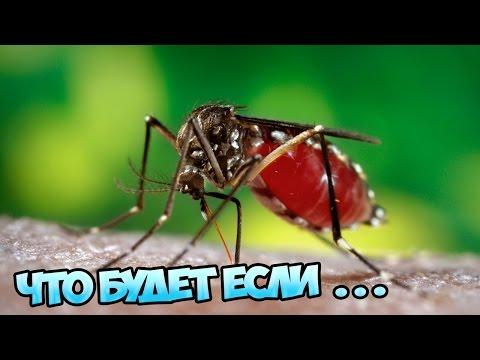 Что будет, если комары исчезнут