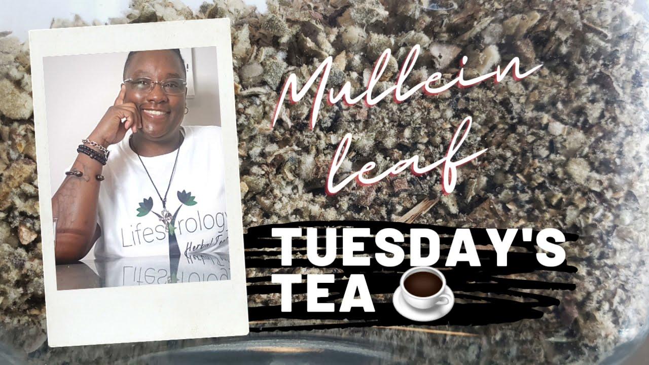 Tuesday's Tea: Mullein Leaf